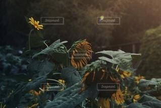 秋の訪れの写真・画像素材[3777205]