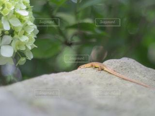 爬虫類の写真・画像素材[3358069]
