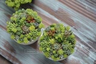 多肉植物の寄せ植えの写真・画像素材[3358929]