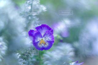 花のぼやけたイメージの写真・画像素材[3359177]