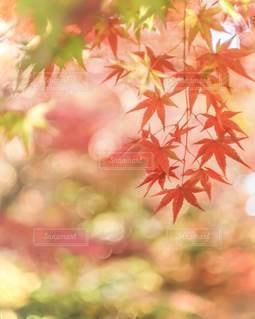 カラフルな秋の写真・画像素材[3492473]