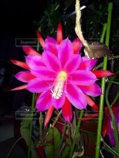 花のクローズアップの写真・画像素材[3357735]