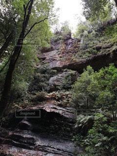 大自然 ジャングルの写真・画像素材[3359348]