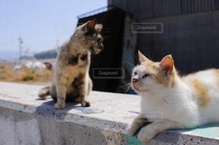 猫の写真・画像素材[140534]