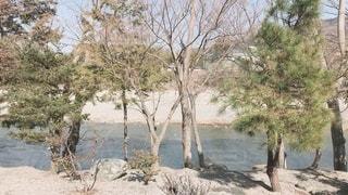 木の隣の水の写真・画像素材[3373068]