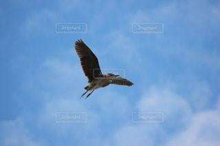 鳥の写真・画像素材[3371173]