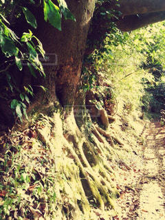 森林の写真・画像素材[155249]