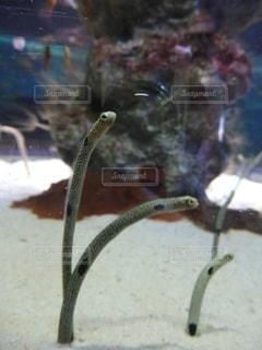 魚のクローズアップの写真・画像素材[3395777]