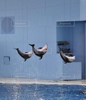 イルカと水しぶきの写真・画像素材[3365717]