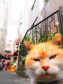 猫の写真・画像素材[389964]