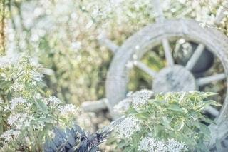 公園の草花の写真・画像素材[3646494]