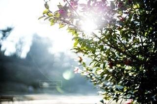 公園での樹木の写真の写真・画像素材[3650329]