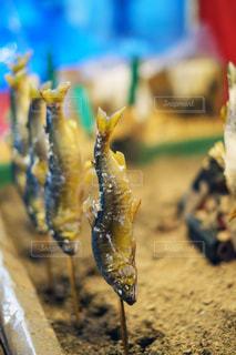 魚のクローズアップの写真・画像素材[3531472]