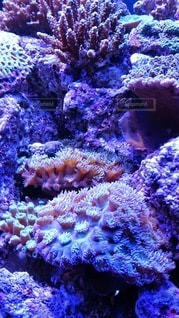 サンゴのクローズアップの写真・画像素材[3490800]