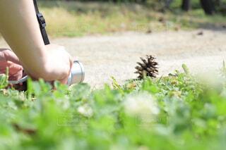 芝生で松ぼっくりを撮る人の写真・画像素材[4350118]