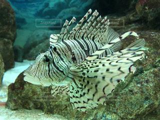 水の中の魚のグループの写真・画像素材[3366948]