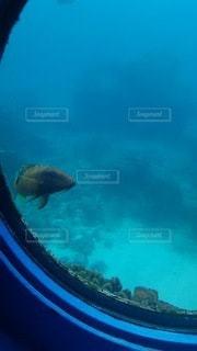 水の中で泳ぐ魚の写真・画像素材[3373603]