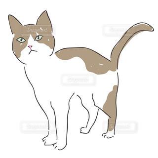 猫の写真・画像素材[141178]