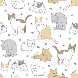 猫の写真・画像素材[141204]