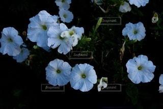 テーブルの上に花の花瓶の写真・画像素材[3371385]