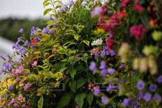 植物の上のピンクの花の写真・画像素材[3565219]
