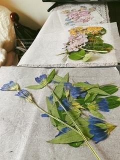 紫陽花、リンドウ、綺麗に押せました!の写真・画像素材[3371747]