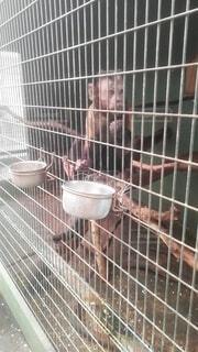 仲良しお猿さん2の写真・画像素材[4441980]