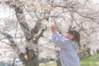 桜と子供の写真・画像素材[3382711]
