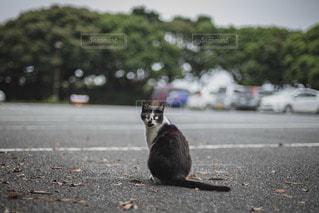 道路の脇に座っている猫の写真・画像素材[3489916]