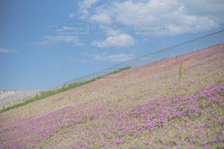 風景の写真・画像素材[3489920]
