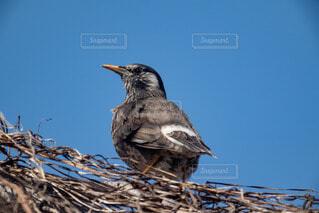 野鳥の写真・画像素材[4241520]