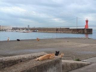 港でくつろぐ猫たちの写真・画像素材[3386203]