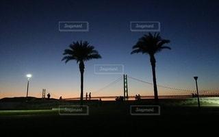 夕暮れ時のヤシの木と海の写真・画像素材[3386241]
