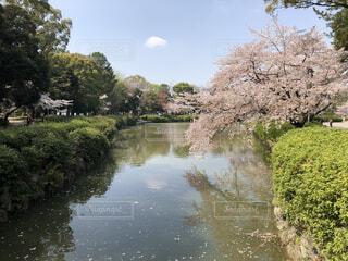 水面に映る桜の写真・画像素材[4025950]