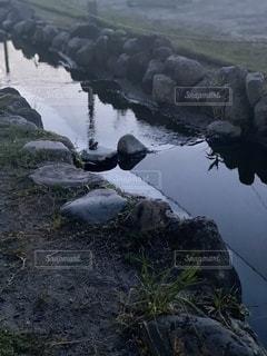 カエルの合唱の写真・画像素材[3380203]