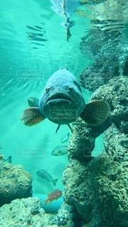 巨大魚の写真・画像素材[3379649]