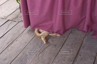 猫の写真・画像素材[142888]