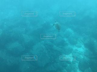 水中のクローズアップの写真・画像素材[3388131]
