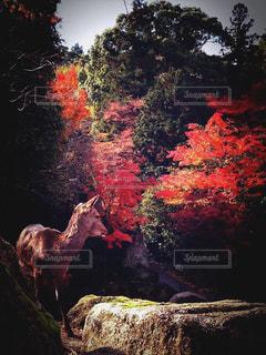 自然 - No.142186
