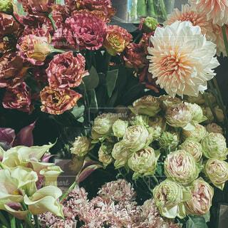 お花の写真・画像素材[4043594]