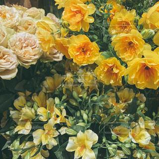 お花の写真・画像素材[4043597]