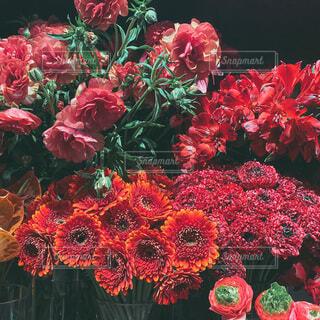 お花の写真・画像素材[4043602]