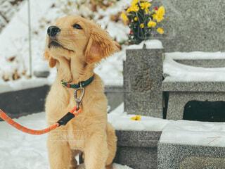 お墓参りをする犬の写真・画像素材[4043605]