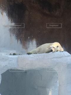 動物の写真・画像素材[147833]