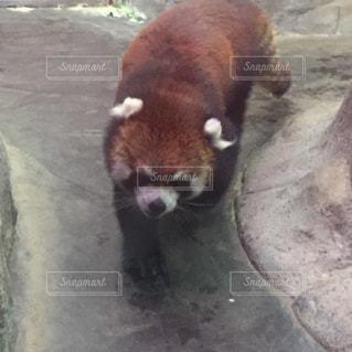 動物の写真・画像素材[147850]