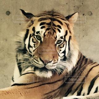 No.147853 動物