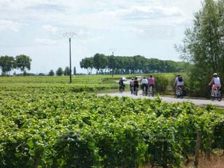 自然,風景,アウトドア,フランス,サイクリング,ワイナリー,ぶどう畑,ゆか写,ブルゴーニュ,ボーヌ
