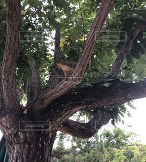 大きな木とリスの写真・画像素材[3388824]