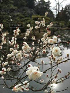 いよいよ春の写真・画像素材[141405]