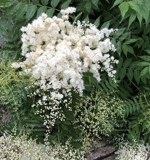 ガーデンの白い花の写真・画像素材[3400289]
